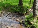 Malý potok posiluje Bílou Orlici, tedy potok jen o málo větší.