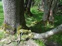 Stromy bojují o život, jen k tomu mají jiné prostředky, než živočichové.
