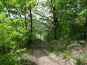 Cesta od Moravské Třebové tam, kde už vstoupila do lesa.
