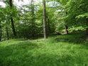 Hezká lesní zeleň na východní straně vrcholu Třebovského hradiska.