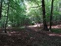 Lesní cesta obepíná celé Třebovské hradisko, nejinak tomu je i na straně východní.