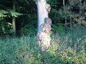 I stromy mají své bolesti.