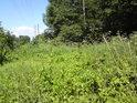 Bujná vegetace v průseku pro elektrické vedení.