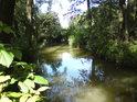 Potok Trotina v severní části chráněného území.