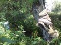 Pobřežní strom si s poraněním dokázal pomoci.