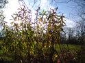 Podzimní Slunce rozjasní nejen oko, ale též srdce.