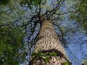 I na Turkově najdeme spoustu krásných stromů.