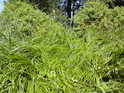 Polehané pobřežní traviny.