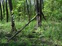 Habrový les je nezaměnitelný.