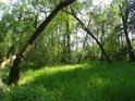 Optická brána z kmenů vrb.