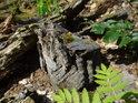 Choroš se stal mrtvým poté, co přišel o hostitelský strom.