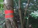 Vnější znak chráněného území na třešni.
