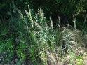 Vyšší tráva na sluníčku působí přirozeně.