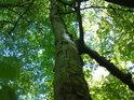 Uschlý strom se stále drží.