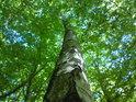 Je zajímavé pozorovat, kolik pater tvoří bukové listí.