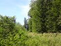 Cesta mezi starším a mladším lesem zarůstá.