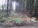 Nenápadná lesní cesta.