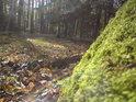 Duha v lese i za sucha? Co by ne.