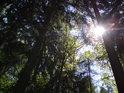 Smíšený les ve vyvážené podobě.