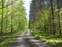 Takové pohledy jsou vzácné, na jedné straně cesty listnatý les a na druhé jehličnatý.