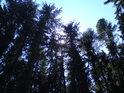 Smrkový les je poblíž luhů spíše vzácný, značí, že zde již příliš vlhko není.