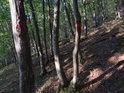 Slunce proniká lesem spíše méně, ale stačí to k rozeznání vnějších hraničních znaků chráněného území.