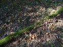 Tlející větev obrostlá mechem ve svahu na slunečním ostrůvku.