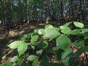 Sluncem zalité listy ve stinném lese.