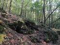 Lesní terénní zlom.