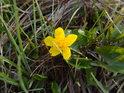 Osamělý květ uprostřed louky.