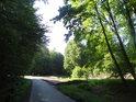 Lesní silnice tvoří severní hranici chráněného území U Vrby.