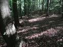 V nitru chráněného území U Vrby najdeme fádní les.