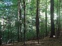 Převážně bukový les.