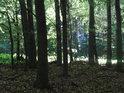 Při okraji bukového lesa.
