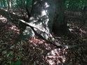 Sluncem osvětlená pata buku je překrytá ještě křivým klackem.