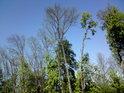 V květnu ještě není všechno listí na stromech narostlé.