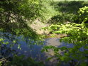 Pohled přes listí do malého vodního toku podél pravého břehu řeky Moravy.