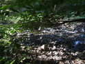 Dno Kohoutovického potoka je často téměř obnažené pro nedostatek vody.
