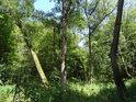 Malý luh v jinak spíše příkrém údolí Oslavy.