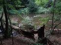 Ulomený habr padl směrem k řece Oslavě.