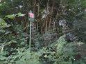 Úřední cedule je umístěna trochu hlouběji do lesa.