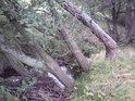 Nad potůčkem, který je pravobřežním přítokem většího potůčku, zvaného Bělá, se vrby kloní i lomí.