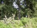 Střední cesta k Úporu konečně naráží na stromy a první ochrannou ceduli.