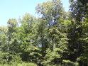 Koruny stromů v horkém létě.