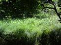 Malá louka uprostřed lesa.