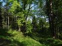 Lesní cesta je poznat, ale poněkud zarůstá, když se po ní nejezdí.