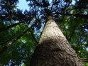 Smrky tu jsou jeden jako druhý, jde tedy s největší pravděpodobností o sázený les.