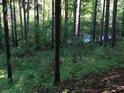 Řeka Chrudimka tvoří severní hranici chráněného území Vápenice.