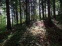 Sluneční ostrůvek v temném lese.