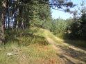 Cesta tvoří přirozenou hranici mezi bory různého věku.